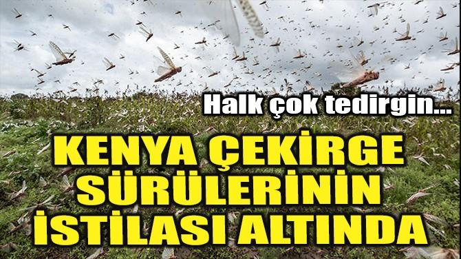 KENYA ÇEKİRGE SÜRÜLERİNİN İSTİLASI ALTINDA!