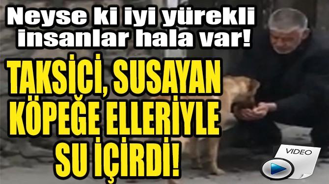 TAKSİCİ, SUSAYAN KÖPEĞE ELLERİYLE SU İÇİRDİ!