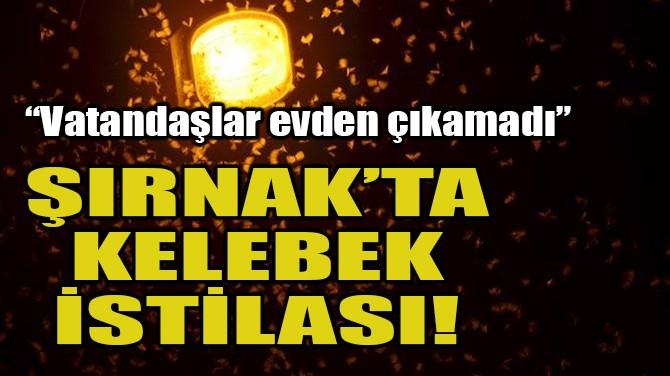 ŞIRNAK'TA KELEBEK İSTİLASI! VATANDAŞLAR EVDEN ÇIKAMADI