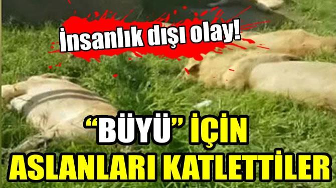 """""""BÜYÜ"""" İÇİN ASLANLARI KATLETTİLER"""