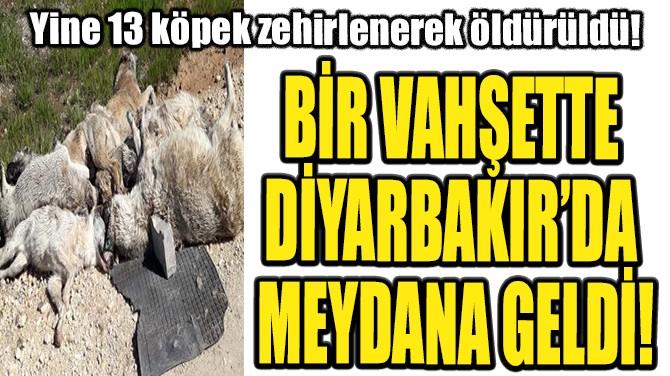 BİR VAHŞETTE DİYARBAKIR'DA MEYDANA GELDİ!