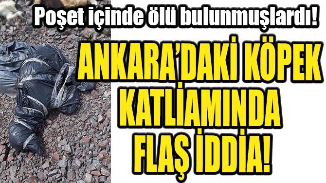 ANKARA'DAKİ KÖPEK KATLİAMINDA FLAŞ İDDİA!