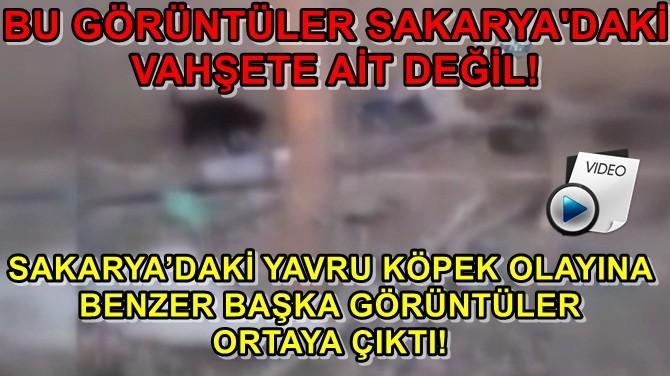 SAKARYA'DAKİ YAVRU KÖPEK OLAYINA BENZER GÖRÜNTÜLER!