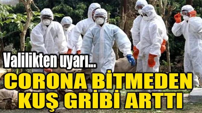 CORONA BİTMEDEN  KUŞ GRİBİ ARTTI