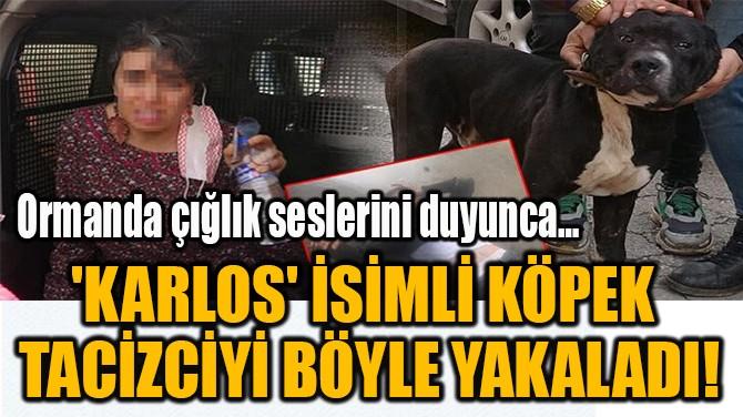 'KARLOS' İSİMLİ KÖPEK  TACİZCİYİ BÖYLE YAKALADI!