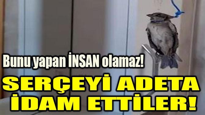 SERÇEYİ ADETA  İDAM ETTİLER!