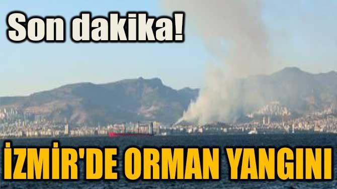 SON DAKİKA! İZMİR'DE ORMAN YANGINI