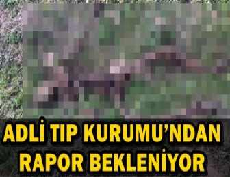 UŞAK'TA VAHŞET! KÖYLÜLER BULDU JANDARMAYA HABER VERDİ...