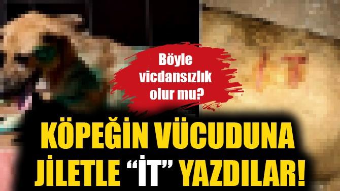 """VİCDANSIZLAR! KÖPEĞİN VÜCUDUNA JİLETLE """"İT"""" YAZDILAR!"""