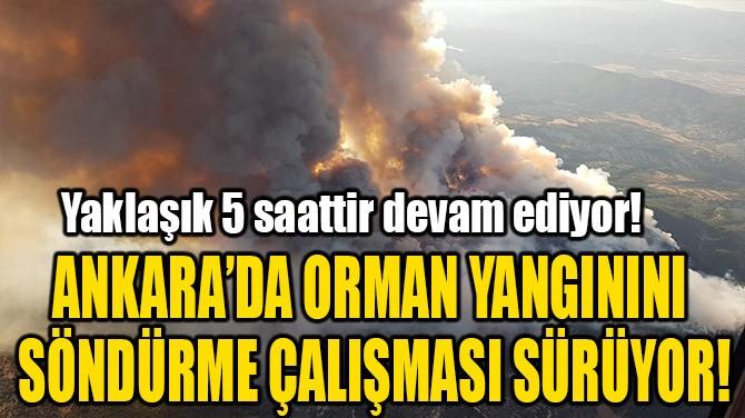 ANKARA'DA ORMAN YANGININI SÖNDÜRME ÇALIŞMASI SÜRÜYOR!