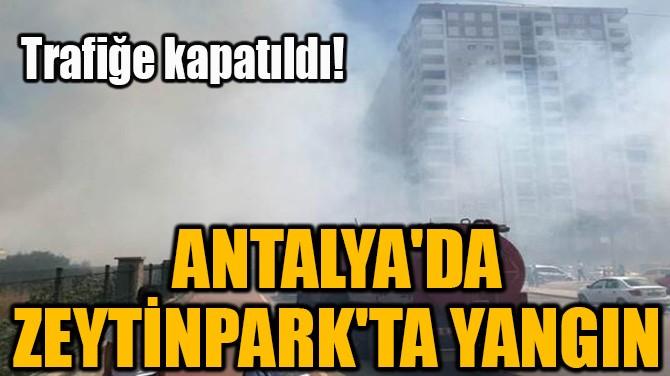 ANTALYA'DA ZEYTİNPARK'TA YANGIN!