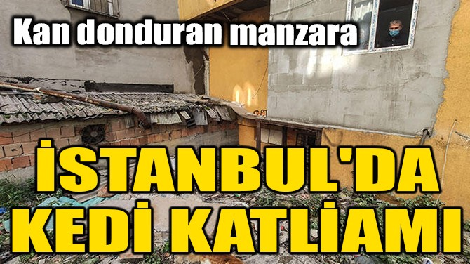 İSTANBUL'DA KEDİ KATLİAMI!