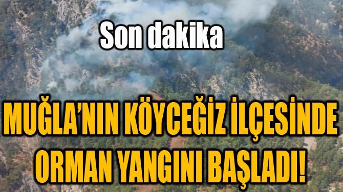 MUĞLA'NIN KÖYCEĞİZ İLÇESİNDE ORMAN YANGINI BAŞLADI!