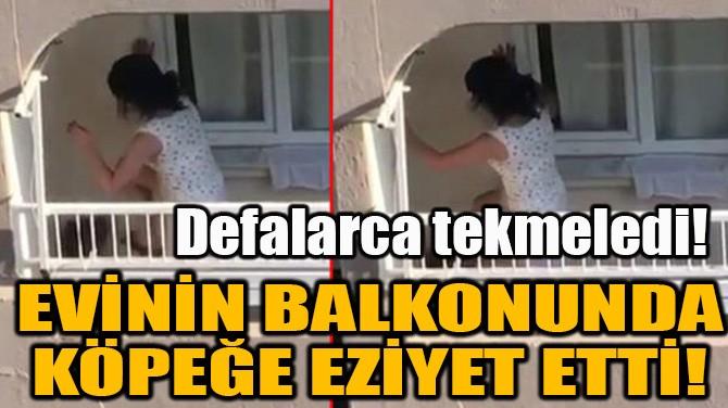 EVİNİN BALKONUNDA KÖPEĞE EZİYET ETTİ!