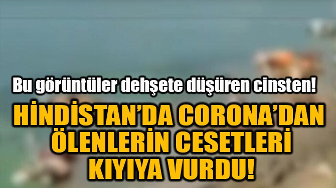 HİNDİSTAN'DA CORONA'DAN ÖLENLERİN CESETLERİ KIYIYA VURDU!