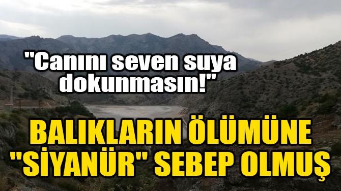 """BALIKLARIN ÖLÜMÜNE """"SİYANÜR"""" SEBEP OLMUŞ!"""