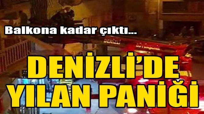 DENİZLİ'DE YILAN PANİĞİ!
