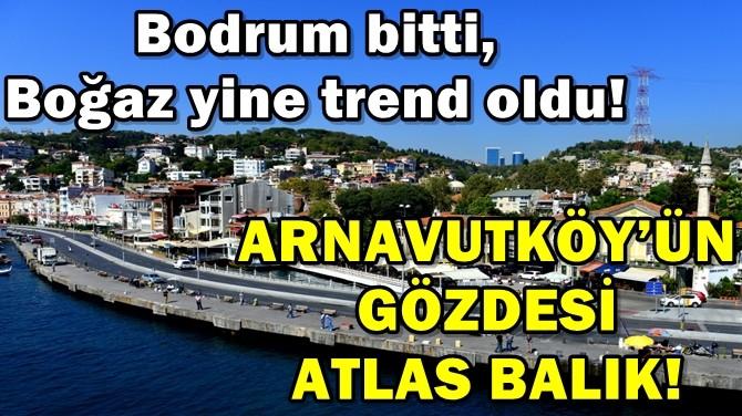 ARNAVUTKÖY'ÜN GÖZDESİ ATLAS BALIK!