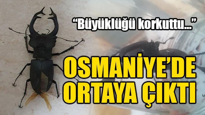 OSMANİYE'DE ORTAYA ÇIKTI!