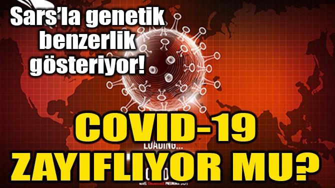 ABD'Lİ UZMANLAR: COVID-19 ZAYIFLIYOR OLABİLİR!