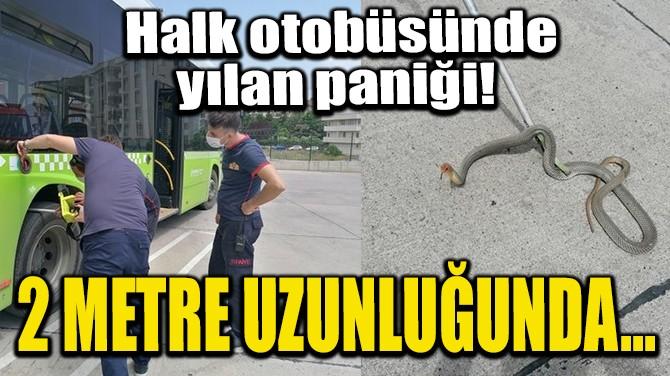 HALK OTOBÜSÜNDE YILAN PANİĞİ! 2 METRE UZUNLUĞUNDA...