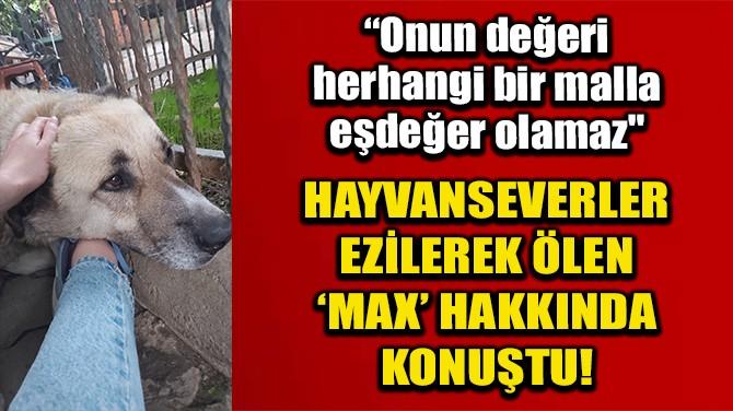 MALTEPE'DE EZİLEREK ÖLEN MAX İLE İLGİLENEN HAYVAN SEVER O ANLARI