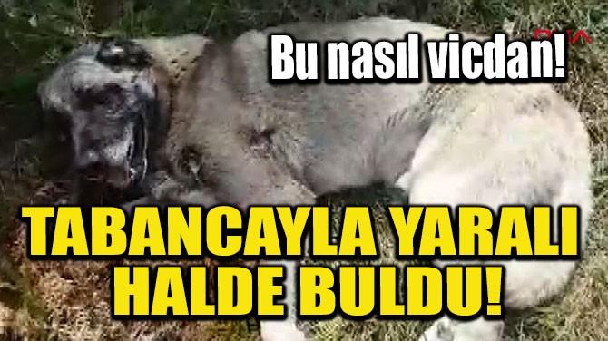 TABANCAYLA YARALI HALDE BULDU!