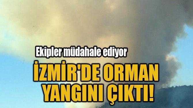 İZMİR'DE ORMAN YANGINI ÇIKTI!