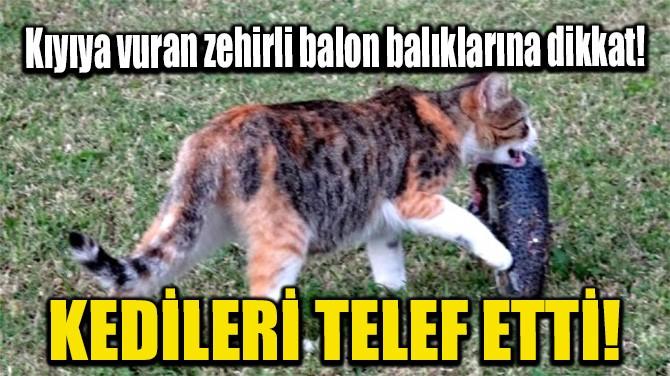 KEDİLERİ TELEF ETTİ!
