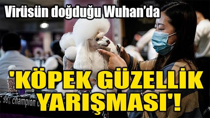 'KÖPEK GÜZELLİK  YARIŞMASI'!