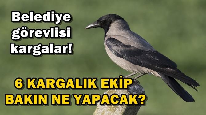 KARGALAR BELEDİYE GÖREVLİSİ OLDU!