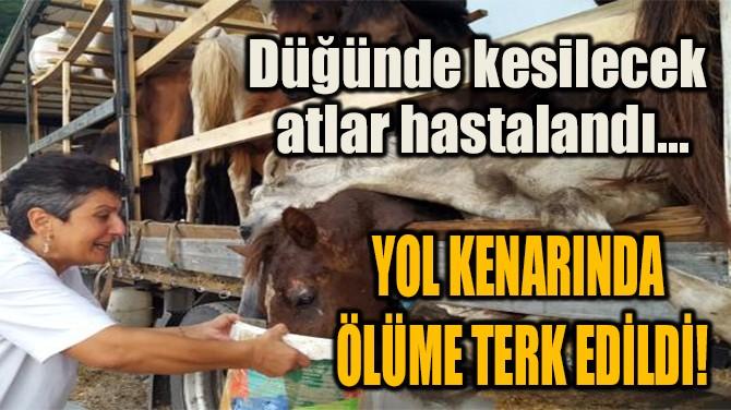 ATLAR YOL KENARINDA ÖLÜME TERK EDİLDİ!