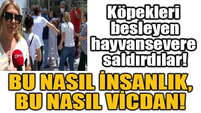 KÖPEKLERİ  BESLEYEN HAYVANSEVERE  SALDIRDILAR!