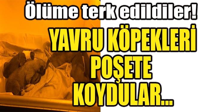 YAVRU KÖPEKLERİ POŞETE KOYUP AĞZINI BAĞLADILAR!