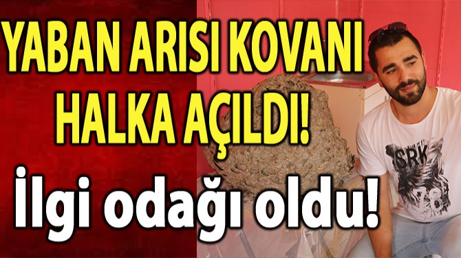 YABAN ARISI KOVANI HALKA AÇILDI!