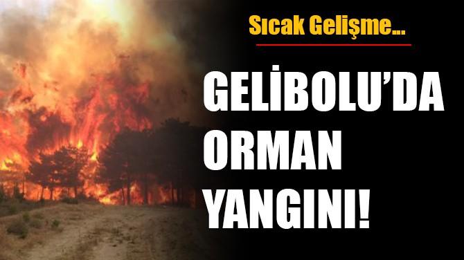 GELİBOLU'DA ORMAN YANGINI!