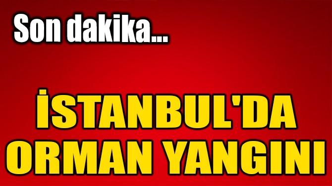 İSTANBUL'DA ORMAN YANGINI