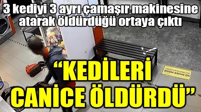 """""""KEDİLERİ CANİCE ÖLDÜRDÜ"""""""
